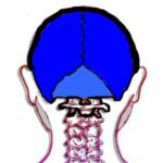 colonne logo - Copie
